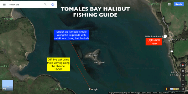 Halibut Fishing Guide