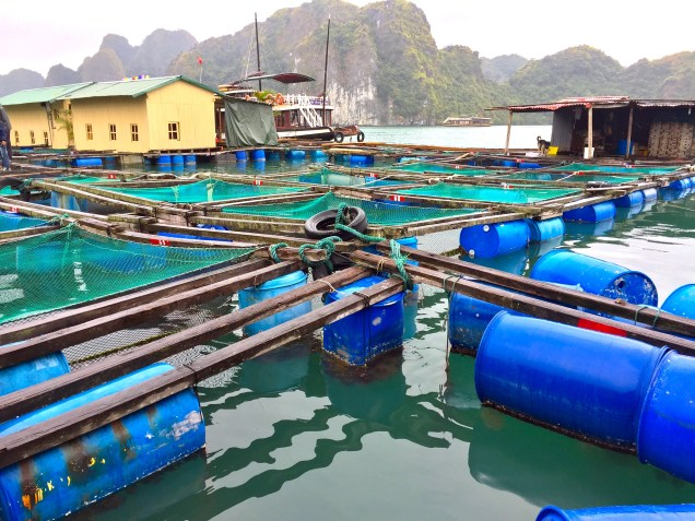 A local fish farming village