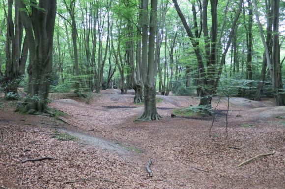 Loughton Camp