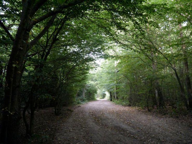 Hainault Forest