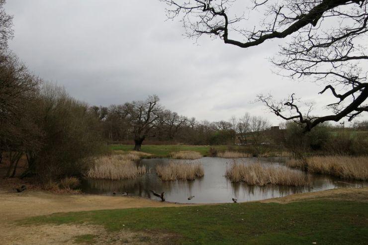 Warren Pond Epping Forest