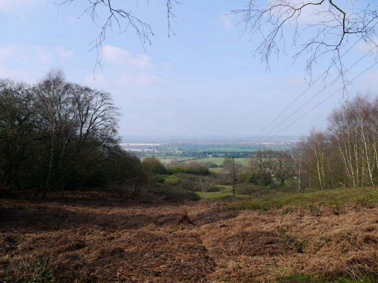 Epping Forest view
