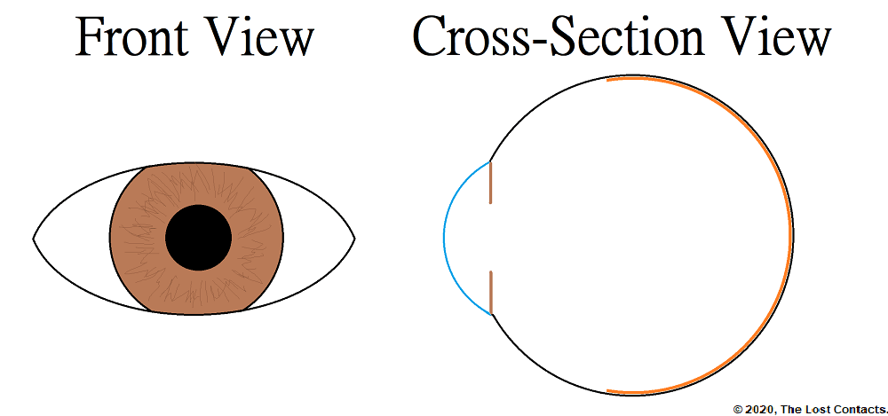 Front and Cross-Section View of the Eye