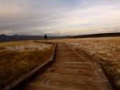 Making our way. Near Bishop, Eastern Sierra CA.
