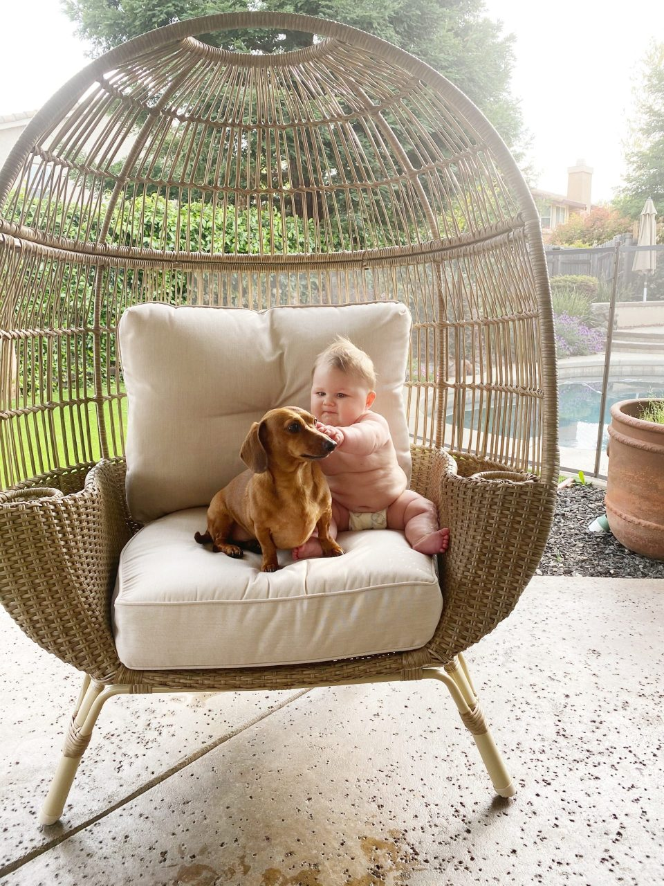 Lily and Mr. Big in the egg chair