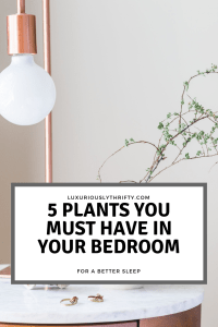 Plants you Should add to your Bedroom | Luxuriously Thrifty