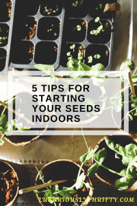 How to Start your Seeds Indoors | Luxuriously Thrifty