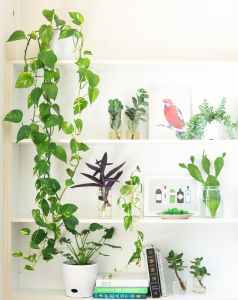 8 Plants you Need for your Bathroom | Luxuriously Thrifty