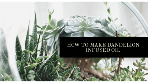 How to make dandelion infused oil for all your skincare recipes | Luxuriously Thrifty