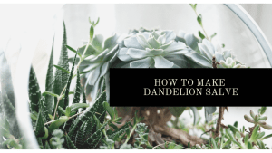 How to make Dandelion Salve. Super simple DIY | Luxuriously Thrifty