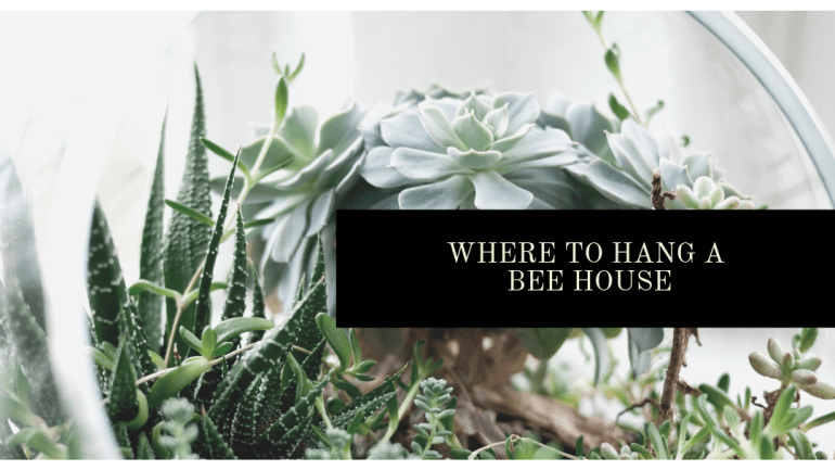 The best place to hang a bee house in your yard | Luxuriously Thrifty