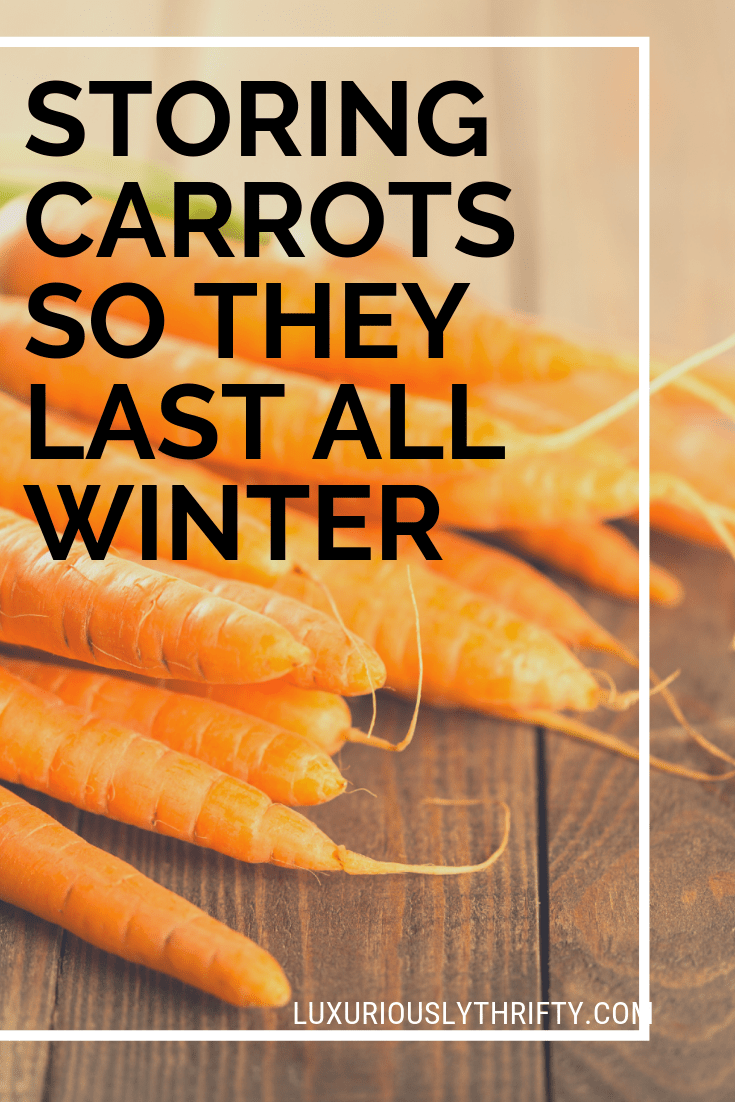 Storing carrots so they last all winter | Luxuriously Thrifty