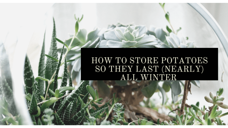Store potatoes so you can enjoy them in the winter months | Luxuriously Thrifty