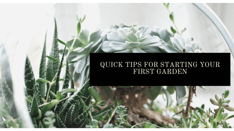 Tips for starting your first garden   Luxuriously Thrifty