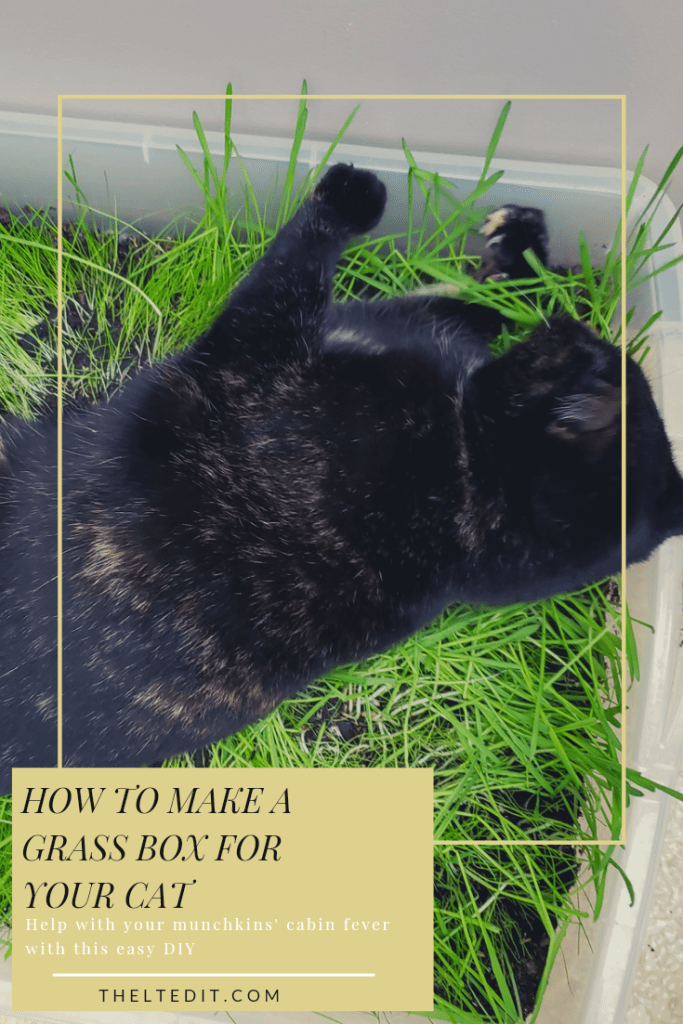 How to make a cat grass box your cats will love! | The LT Edit