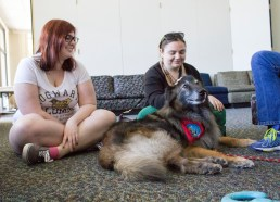 Freshman Kelly Donnell (right) and Freshman Madison Reed-Stacy (left) petting Wizard, 13. According to Wizard's owner, he has been a therapy dog since 2013. | Photo by Liam Olson