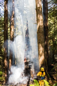 Tree smoldering as fire is extinguished, Arcata Fire September 14. Photo by Ian Benjamin Finnegan Thompson