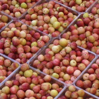 Cranberry Garnishes