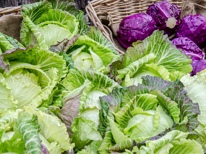 Portland Farmers Market Opening Day 2014: Cabbage