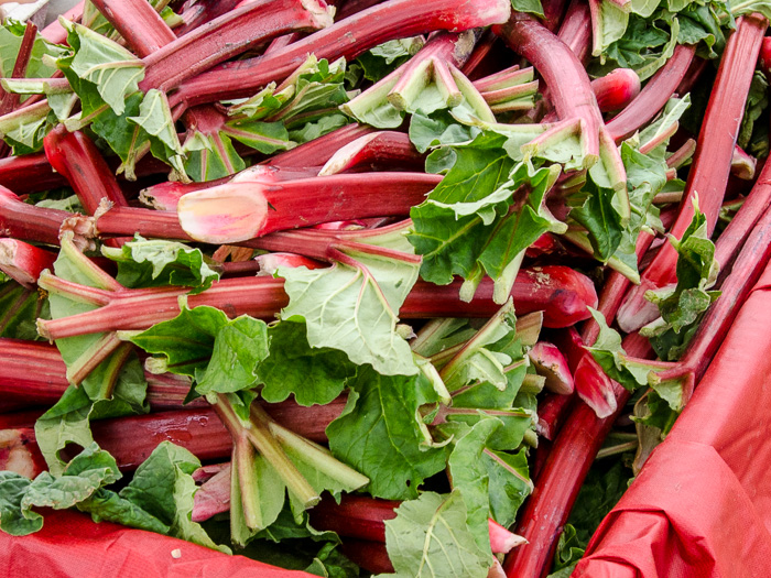 Portland Farmers Market Opening Day 2014: Local Rhubarb