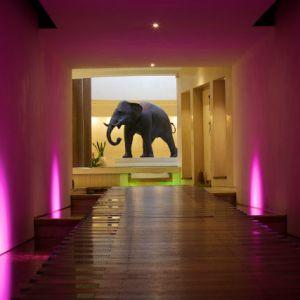 Seaham_Hall_Spa_Elephant