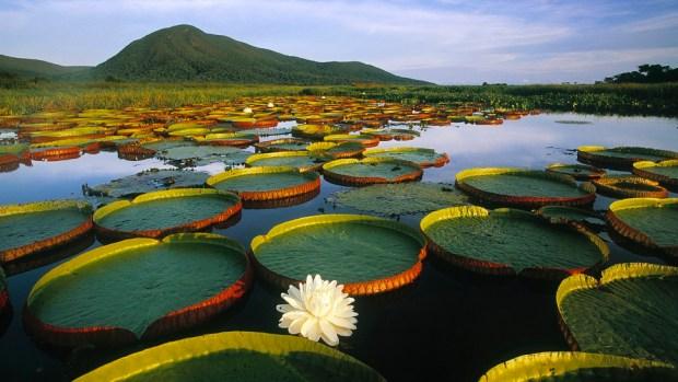 PANTANAL WETLANDS, BRAZIL