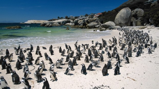 GET UP CLOSE WITH PENGUINS