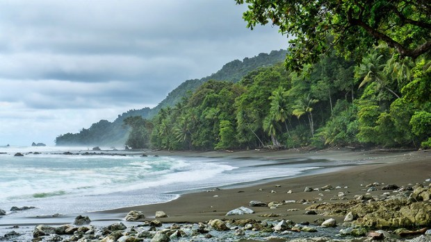 CORCOVADO NATIONAL PARK, COSTA RICA (photo provides by https://thepnwguide.com)