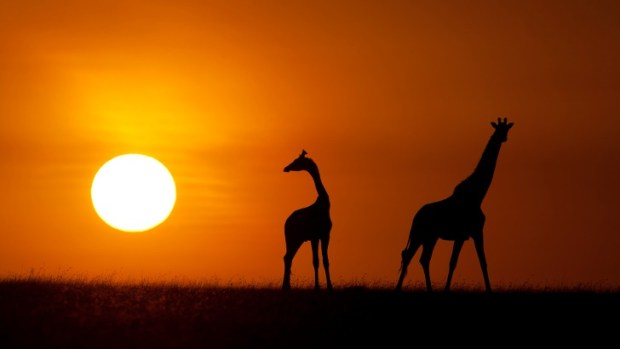 WIN A LUXURY AFRICAN SAFARI