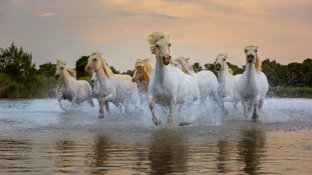 THE CAMARGUE, PROVENCE