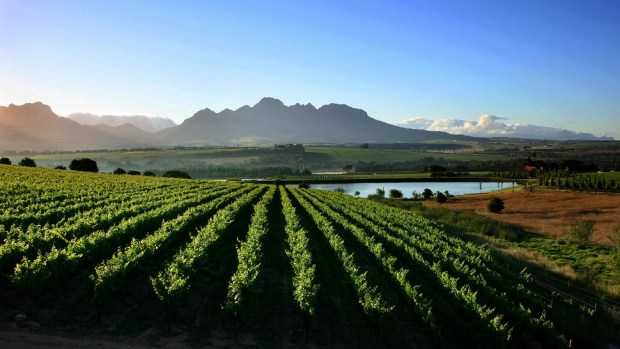 ENTERTAIN YOUR TASTE BUDS ALONG THE WINE ROUTES