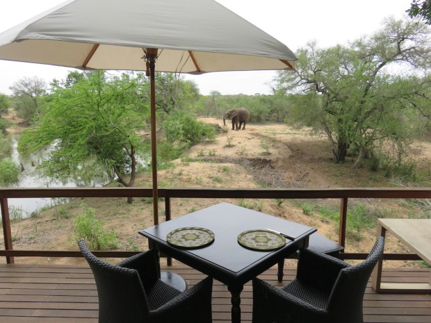 ELEPHANTS AROUND WATER HOLE NEAR LOBBY