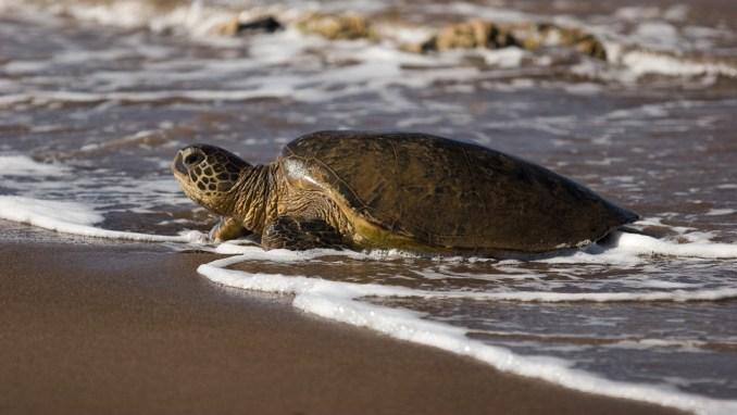 SPOT WILDLIFE AT POIPU BEACH