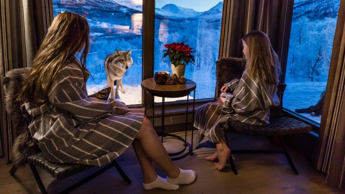 GET UP CLOSE AND PERSONAL WITH WOLVES IN A LUXURY HOTEL