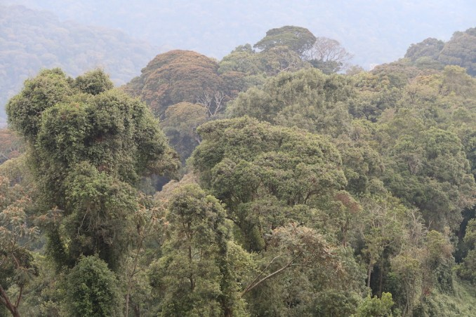 NYUNGWE NATIONAL PARK: CANOPY WALK (VIEWS)