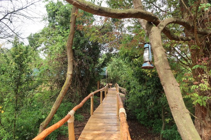 RUZIZI TENTED LODGE: WALKWAY TO ROOMS