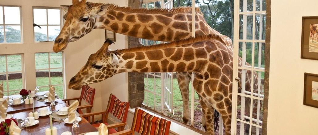 quircky unusual unique hotels world