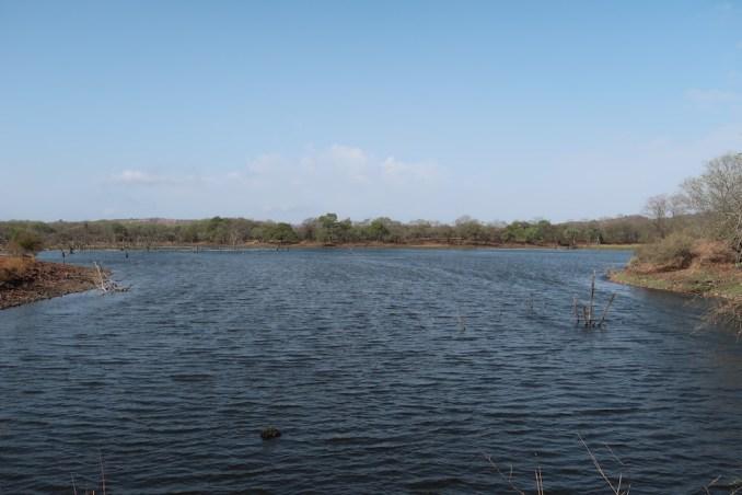 SAFARI IN RANTHAMBORE NATIONAL PARK