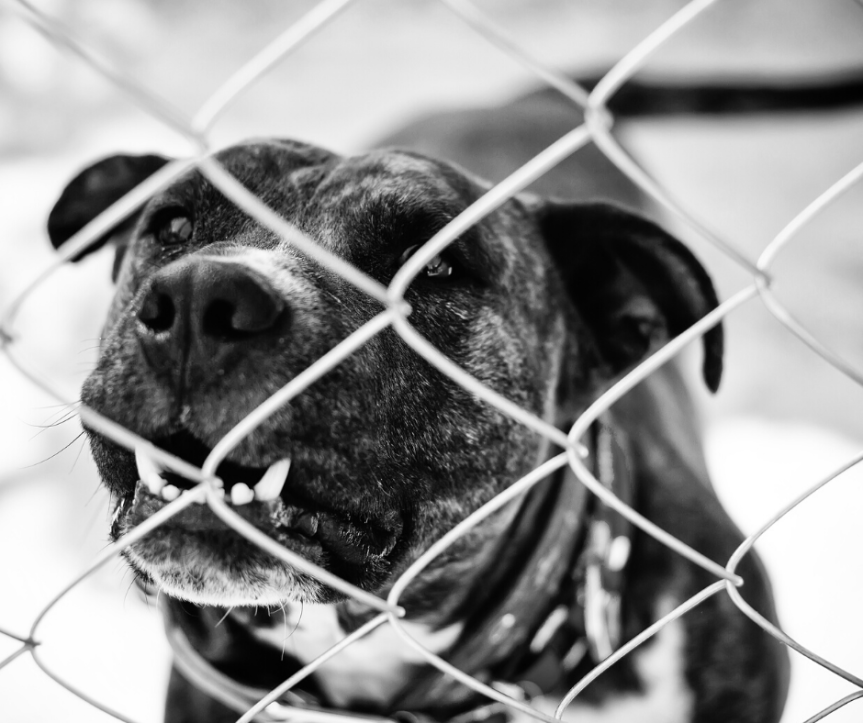 New bill would ban felony animal abusers from owning pets