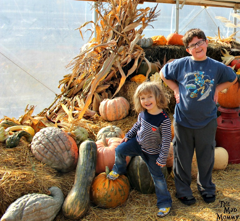 They had fun on our perfect pumpkin picking adventure!