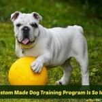 Why A Custom Made Dog Training Program Is So Important