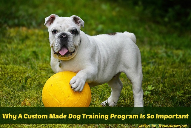 Dogs come in all shapes, sizes, personalities, and temperaments. That is part of what makes training your dog so difficult.