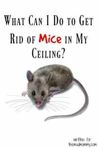 What Can I Do to Get Rid of Mice in My Ceiling?