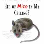 how to get rid of mice in walls and ceilings