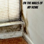 How to Prevent Mold Build-Up on the Walls of My Home