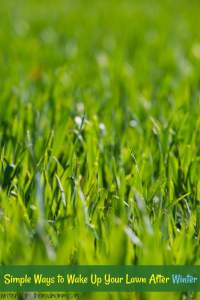 Simple Ways to Wake Up Your Lawn After Winter