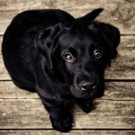 How to Improve Puppy's Attention Quickly and Easily