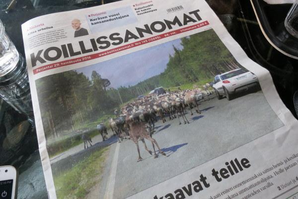 reindeer-news