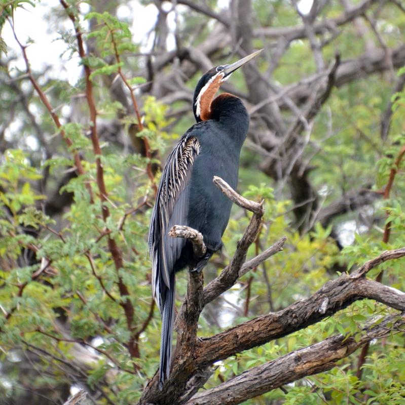 Birds of the Zambezi Region of Namibia - The Mad Traveler