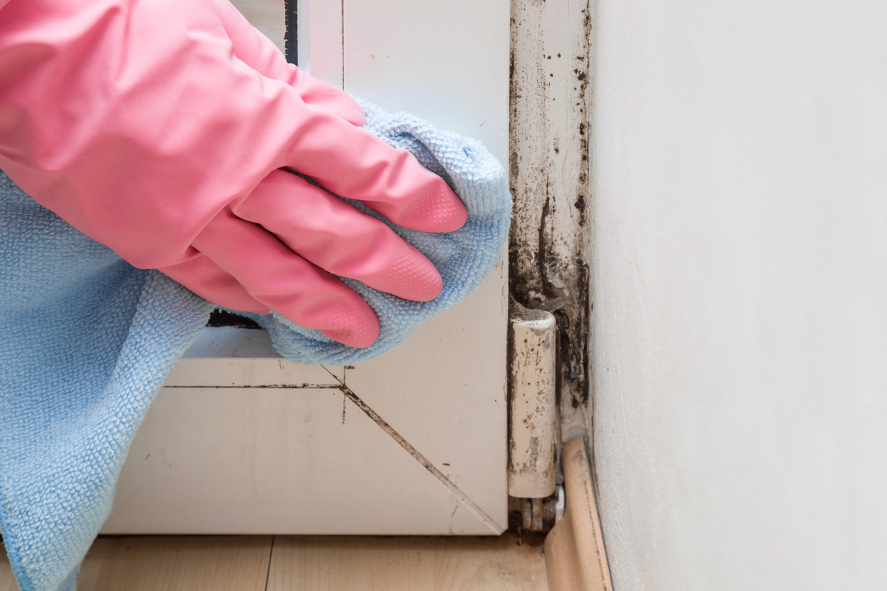 A close-up shot of hands with rubber gloves trying to remove mold in a house.